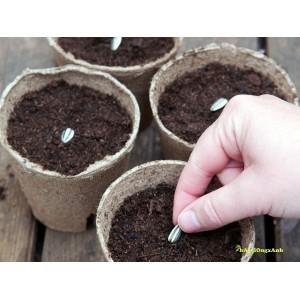 Hướng dẫn gieo trồng cơ bản các loại hạt giống