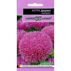 Hoa cúc hồng aster f1 (độc quyền)