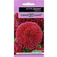 Hoa cúc aster đỏ f1 (độc quyền)