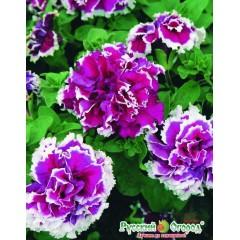 Hạt giống dã yên thảo kép hoa hồng f1