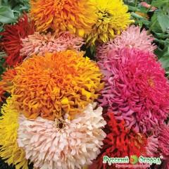 Hỗn hợp hoa bách nhựt barpis