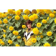 Hoa hướng dương kép