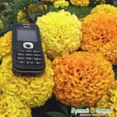 Hổn hợp hoa cúc vạn thọ f1 14cm