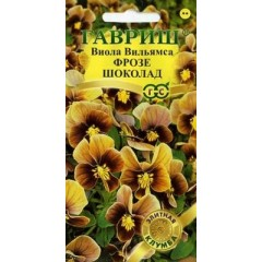 Hoa viola socola