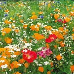 HH hoa trang trí sân vườn 12-48cm