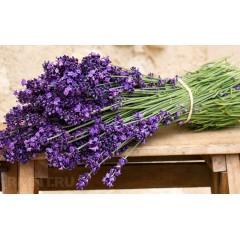 Hoa lavender (hoa oải hương)
